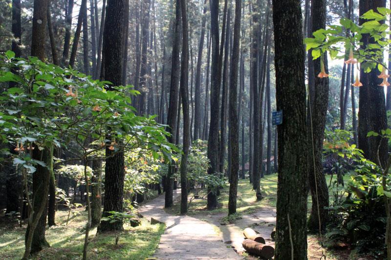 Tempat Wisata di Bandung - Djuanda Forest Park
