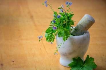 60 Jenis Tanaman Herbal Obat Alami Keluarga (Toga)