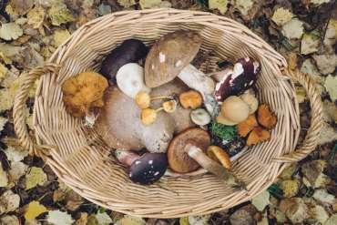 18 Macam Jenis Jamur yang Bisa Dikonsumsi Selain Jamur Enoki