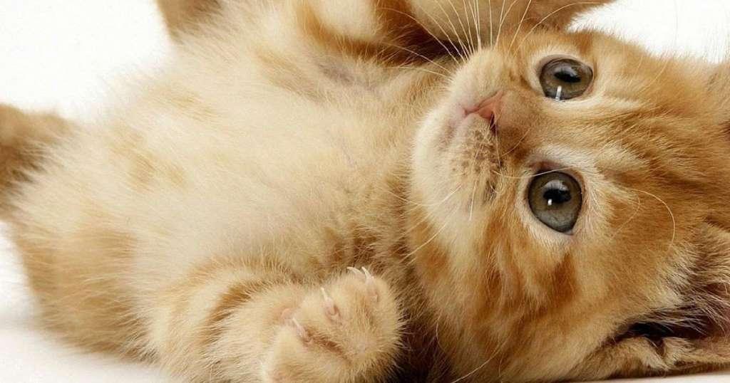 Gambar Kucing Lucu Galau Dan Imut Yang Menggemaskan 2020