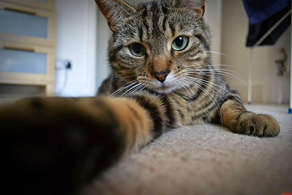 Gambar Kucing Ekspresi Lucu godean.web.id